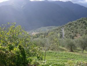 oliven (4)