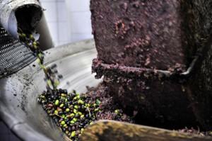 oliven (9)